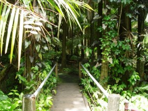 Path bridge