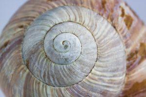 shell-1186245_640